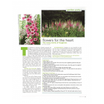 Troy Rhone - Garden Designer Fox Gloves