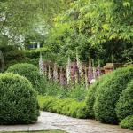 modernist garden design - troy rhone landscapes and gardens